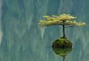 Правилата на живота – мъдрости от Дзен будизма