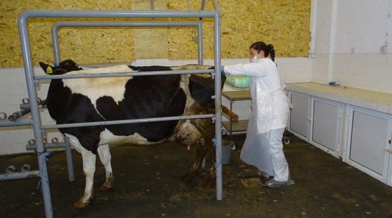 Бъдещите ветеринарни лекари на ТрУ държат държавен изпит присъствено, при спазване на противоепидемични мерки