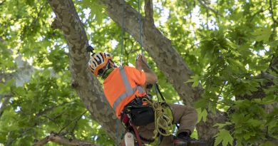 Представиха обследване на дърво по иновативна методика в Стара Загора